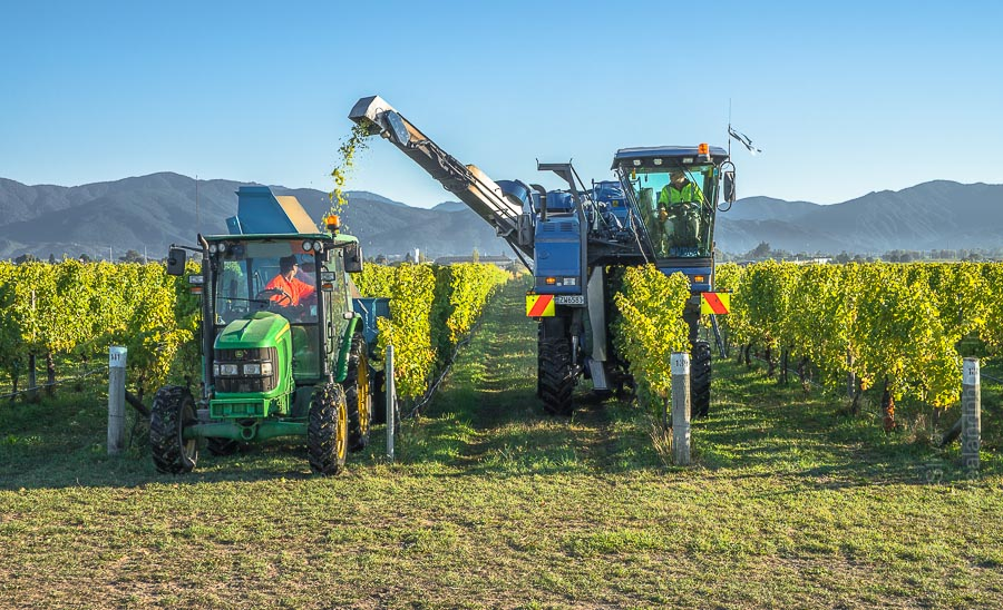 Wine harvester, Fairhall, Marlborough, New Zealand