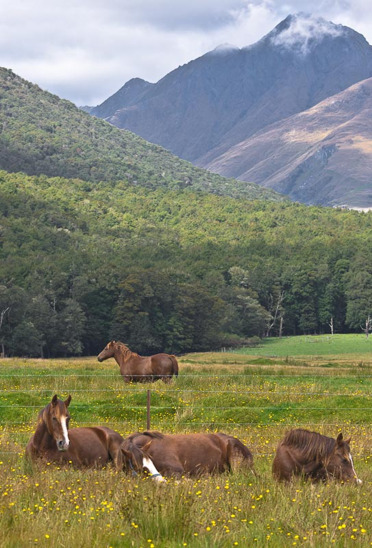 Horses in Paradise, Glenorchy, New Zealand