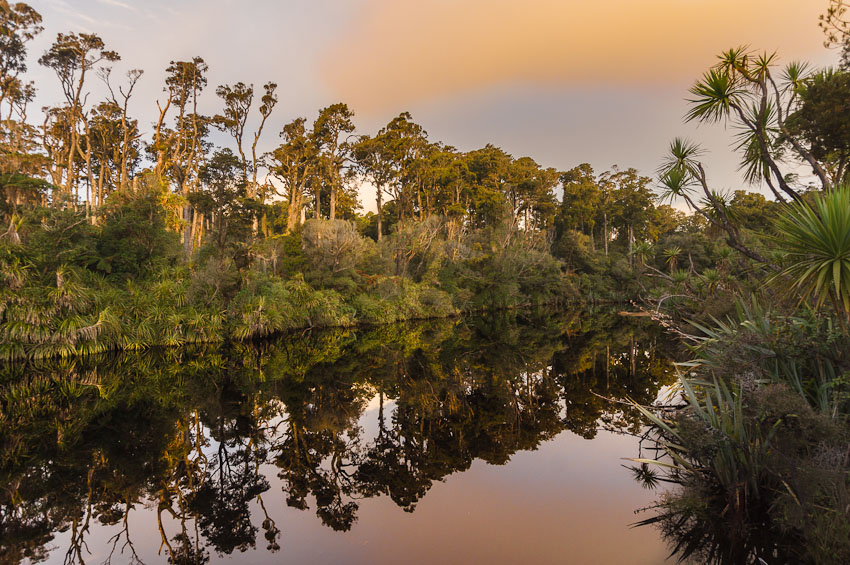 Dusk over Rainforest at Ship Creek, West Coast, New Zealand