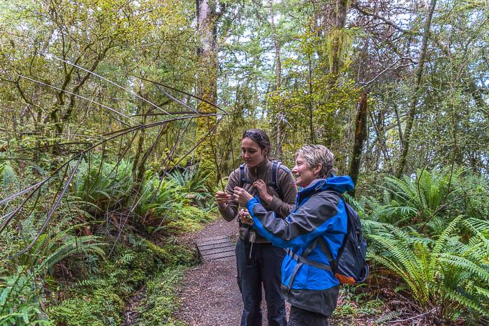 Guided nature walk, Kepler Track, Fiordland