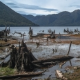 Lake Monowai and stumps, Fiordland, New Zealand | photography