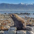 Point Kean seal colony, Kaikoura, New Zealand | photography