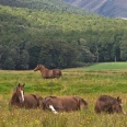 Horses in Paradise, Glenorchy, New Zealand | photography