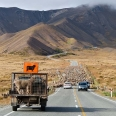Sheep on road to Lindis Pass, New Zealand | photography