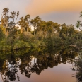 Dusk over Rainforest at Ship Creek, West Coast, New Zealand | photography