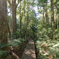 Trounson Kauri Park, Northland, New Zealand | photography